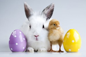 easter 3 _careco
