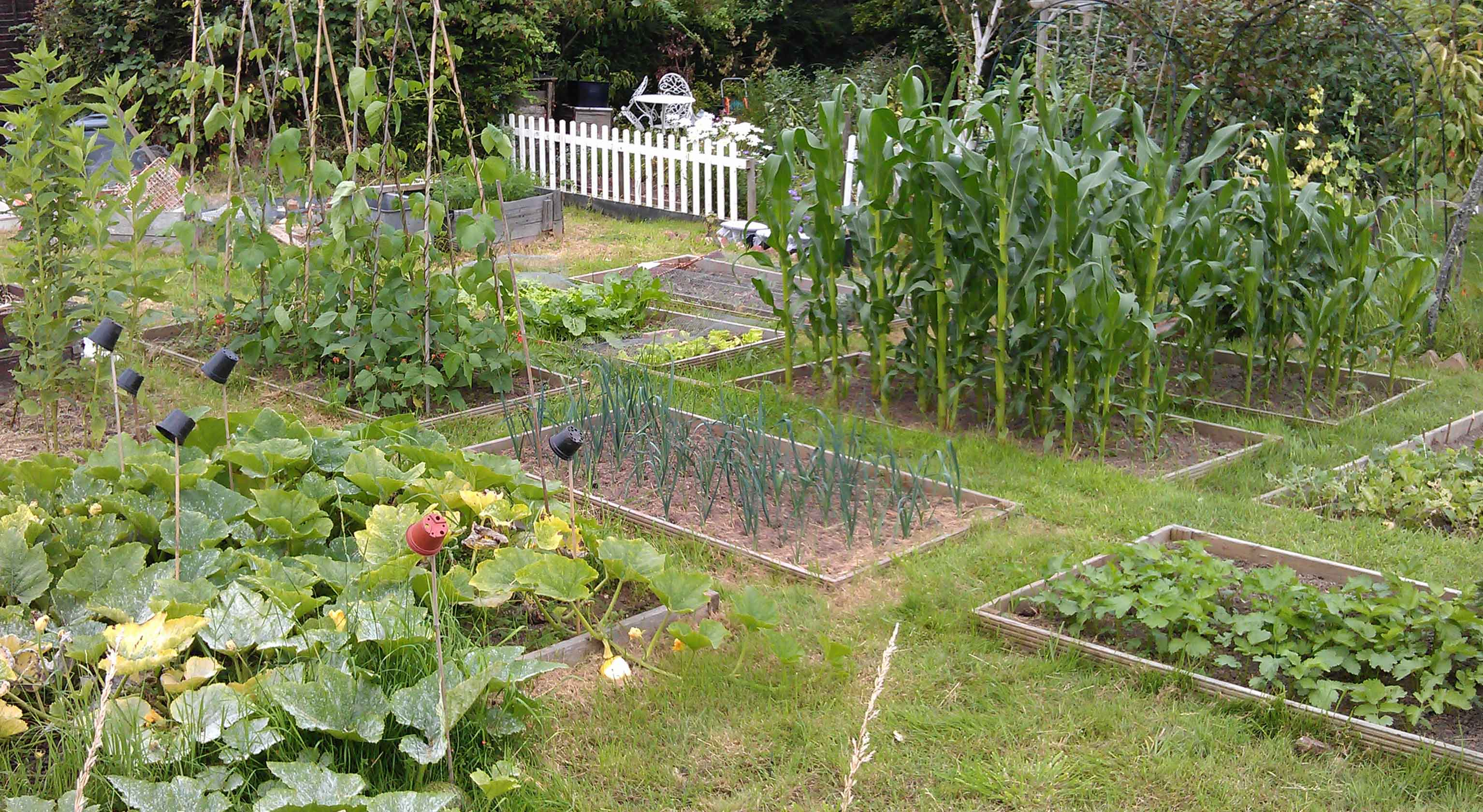 national allotment week 8th-14th august 2016 - careco blog