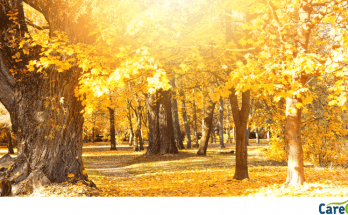 Autumn woodland scene with vibrant yellow leaves